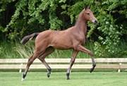Hest til salg - 410 - FIRST LADY