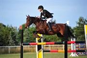 Hest til salg - Natka