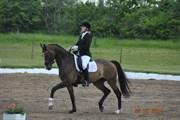 Hest til salg - SIR CONNERY SAKSTRUP