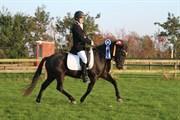 Hest til salg - SKOVLUNDEGÅRDS QUALITY