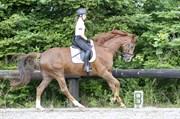 Hest til salg - SKIKKILD'S DENARIO