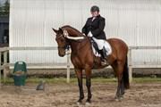 Hest til salg - LANDIANO