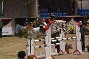 Hest til salg - HAMTARO