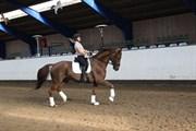 Hest til salg - ENGAS ALDIOR (NWB)