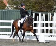 Hest til salg - RICO