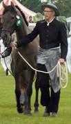 Hest til salg - Rohans Narja
