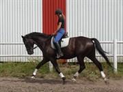Hest til salg - ZILOG