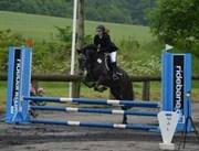 Hest til salg - Nørhedens Anthon