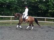 Hest til salg - VILLAGAARDENS LOUIE