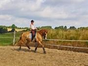 Hest til salg - AYA