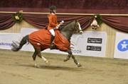 Hest til salg - Smukke