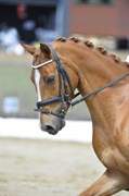 Hest til salg - RM CAISER