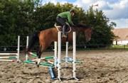 Hest til salg - Futura