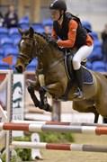 Hest til salg - NØRLUNDS WICHY